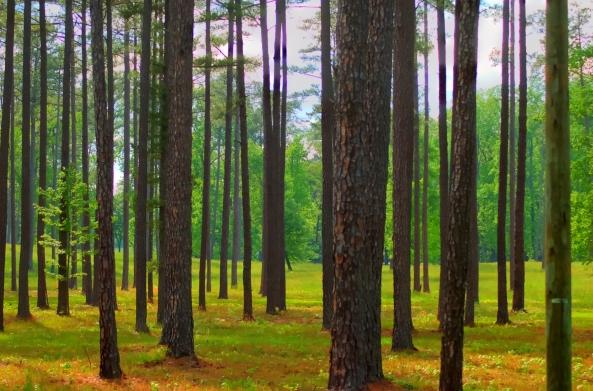 trees 1  05-11-2013