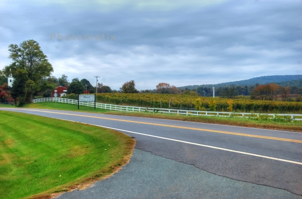 vineyard 10192013