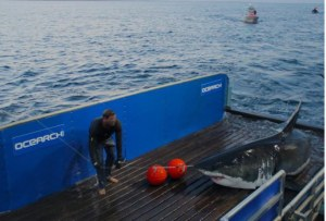 mary-lee-ocearch