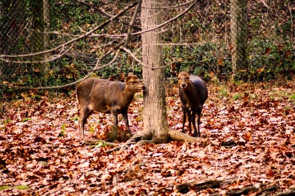 Northern Deer 121515